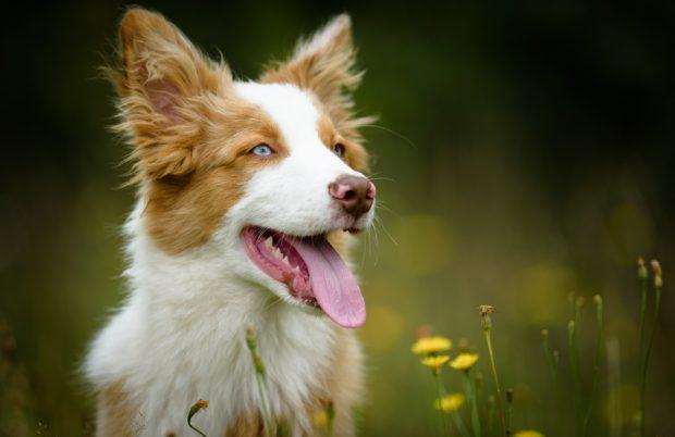melanka_Dogs-1-15