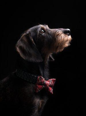 melanka_Dogs-1-17