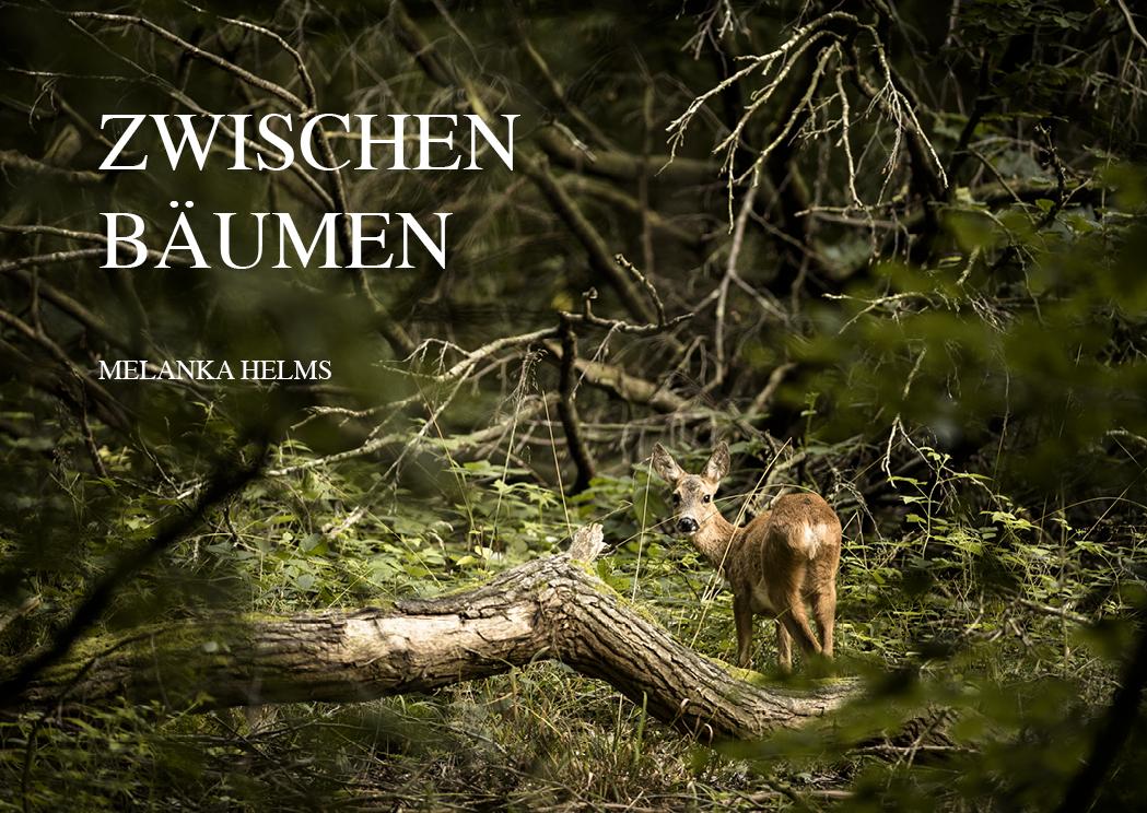 Postkarte_ZwischenBaeumen